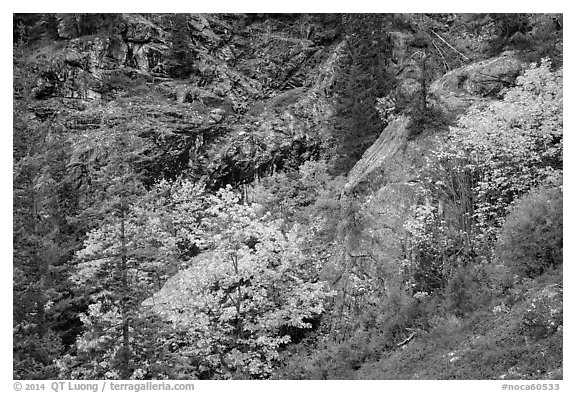 Trees and cliffs in autumn, North Cascades National Park Service Complex.  (black and white)