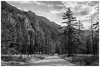 Road, Stehekin Valley, North Cascades National Park Service Complex.  ( black and white)