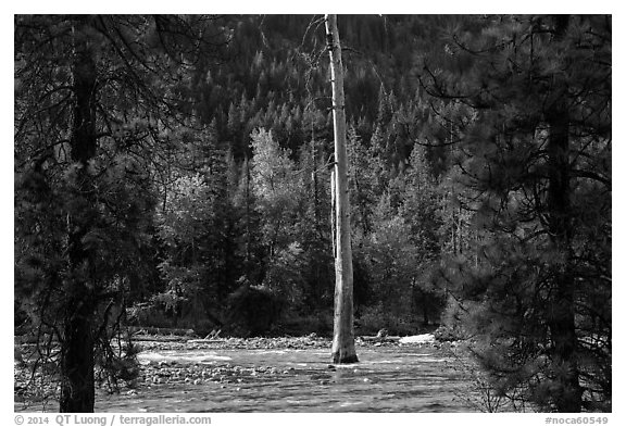 Lone dead tree standing in Stehekin River, North Cascades National Park Service Complex.  (black and white)
