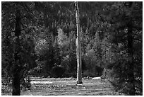 Lone dead tree standing in Stehekin River, North Cascades National Park Service Complex.  ( black and white)