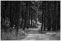 Road in forest, Stehekin Valley, North Cascades National Park Service Complex.  ( black and white)