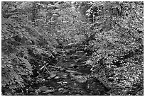 Stream, Stehekin, North Cascades National Park Service Complex.  ( black and white)