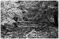 Trees in autum foliage bordering stream, Stehekin, North Cascades National Park Service Complex.  ( black and white)