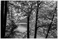 Trees in fall foliage on shore of Lake Chelan, Stehekin, North Cascades National Park Service Complex.  ( black and white)