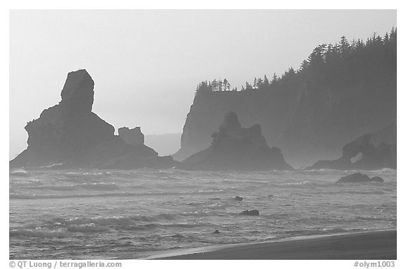 Sea stacks and arch on Shi-Shi Beach. Olympic National Park (black and white)