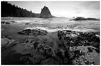 Tidepool at Rialto beach. Olympic National Park, Washington, USA. (black and white)