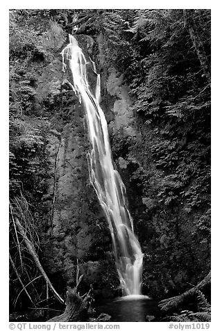 Mossy waterfall , Elwha valley. Olympic National Park (black and white)