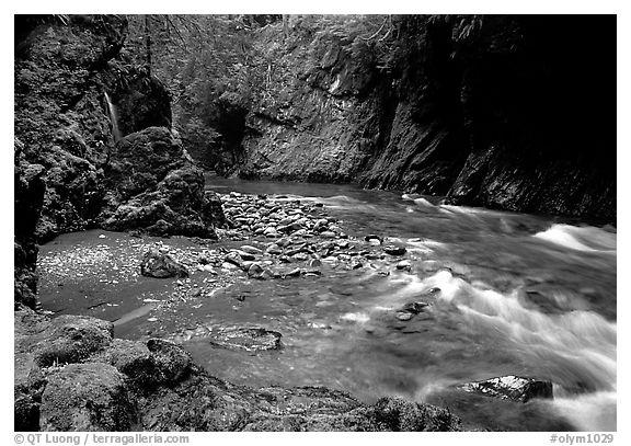 North fork of the Quinault river. Olympic National Park (black and white)