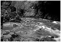 North fork of the Quinault river. Olympic National Park, Washington, USA. (black and white)