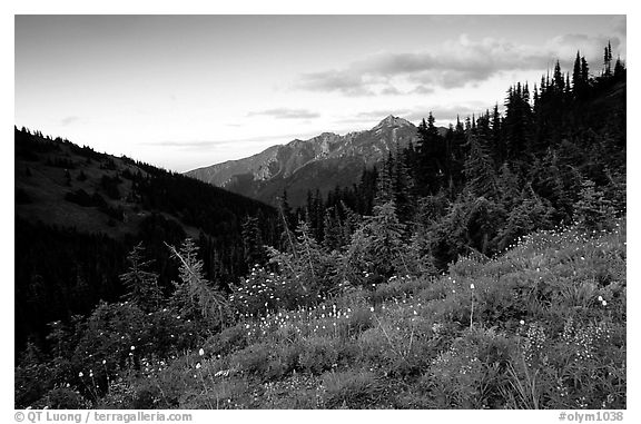 Wildflowers at sunset, Hurricane ridge. Olympic National Park (black and white)