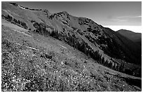 Wildflowers on hill, Hurricane ridge. Olympic National Park ( black and white)