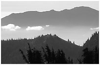 Wind-twisted trees and mountain ridges from Hurricane hill. Olympic National Park, Washington, USA. (black and white)