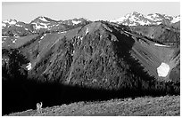 Deer on ridge with Olympic Mountains behind, Hurricane ridge, morning. Olympic National Park, Washington, USA. (black and white)