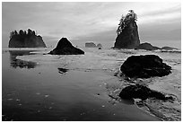 Beach with seastacks and reflections. Olympic National Park, Washington, USA. (black and white)