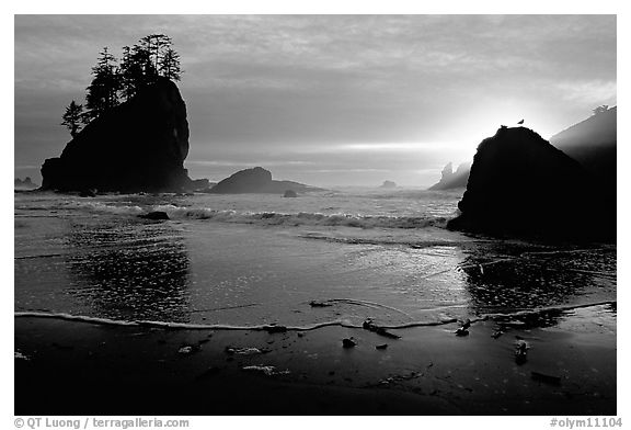 Beach, seastacks and rock with bird, Second Beach, sunset. Olympic National Park (black and white)
