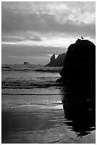 Rock with bird, Second Beach, sunset. Olympic National Park, Washington, USA. (black and white)