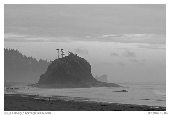 Seastack, Second Beach, dusk. Olympic National Park (black and white)
