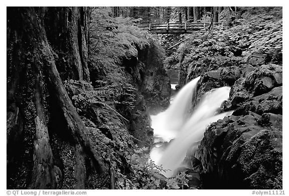 Sol Duc falls and footbridge. Olympic National Park (black and white)