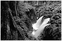 Sol Duc falls and footbridge. Olympic National Park, Washington, USA. (black and white)