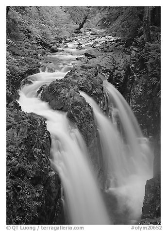 Sol Duc river and falls. Olympic National Park (black and white)