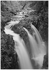 Sol Duc river and falls. Olympic National Park ( black and white)