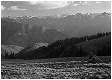 Meadow with wildflowers, ridges, and Olympic Mountains. Olympic National Park, Washington, USA. (black and white)