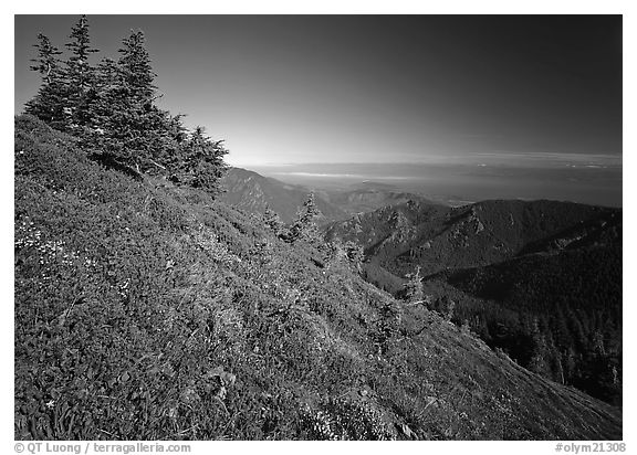 Looking towards  Strait of San Juan de Fuca from Hurricane hill. Olympic National Park (black and white)