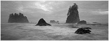 Misty seascape with sea stacks. Olympic National Park (Panoramic black and white)