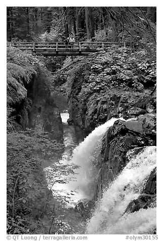 Sol Duc waterfall and bridge. Olympic National Park (black and white)