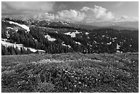 Wildflowers, hills, and Olympic mountains. Olympic National Park ( black and white)