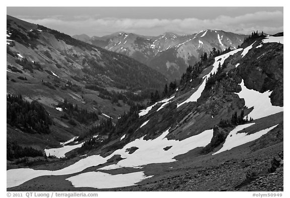 Badger Valley. Olympic National Park (black and white)