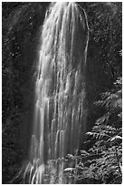 Marymere Falls, summer. Olympic National Park ( black and white)