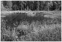 Dark pond, Hoh rain forest. Olympic National Park, Washington, USA. (black and white)