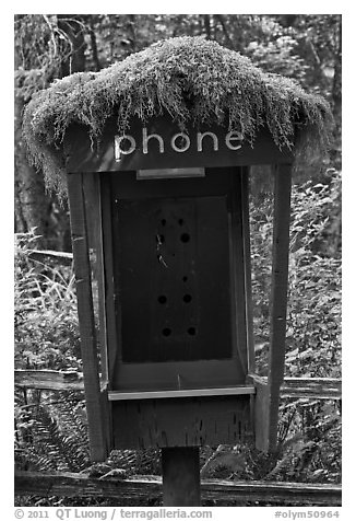 Phone booth covered by moss. Olympic National Park (black and white)