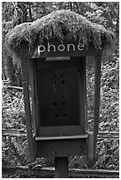 Phone booth covered by moss. Olympic National Park, Washington, USA. (black and white)