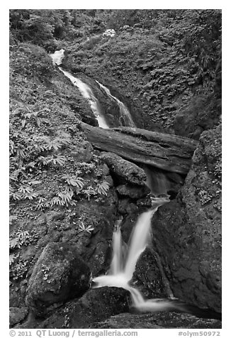 Merriman Falls. Olympic National Park (black and white)