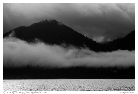 Fog hanging over shores of Lake Quinault. Olympic National Park (black and white)