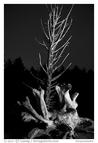 Driftwood and dead tree at night, Rialto Beach. Olympic National Park (black and white)