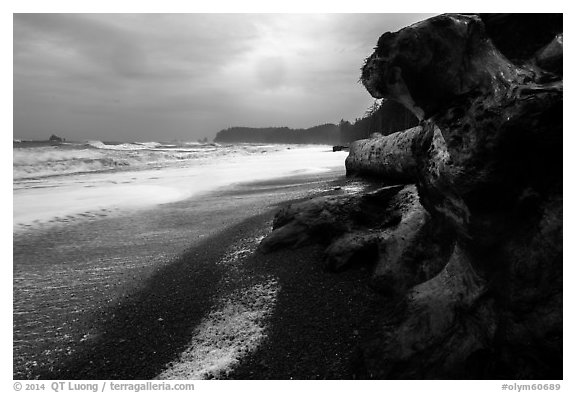 Driftwood and black pebble beach in stormy weather, Rialto Beach. Olympic National Park (black and white)
