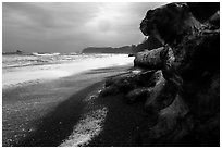 Driftwood and black pebble beach in stormy weather, Rialto Beach. Olympic National Park ( black and white)
