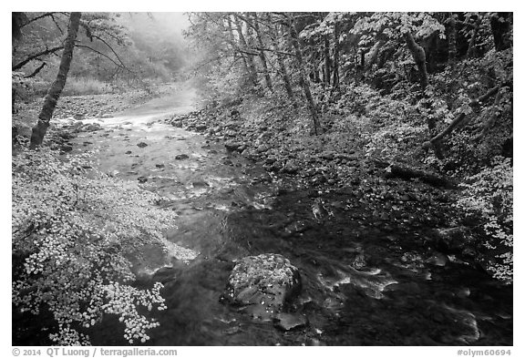 Confluence of North Fork and Sol Duc River in autumn. Olympic National Park (black and white)