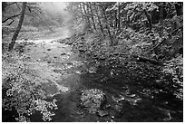 Confluence of North Fork and Sol Duc River in autumn. Olympic National Park ( black and white)