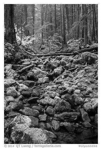 Stream, mossy boulders, and old growth forest, Sol Duc. Olympic National Park (black and white)
