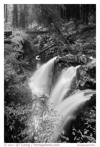 Sol Duc Falls and bridge in autumn. Olympic National Park (black and white)