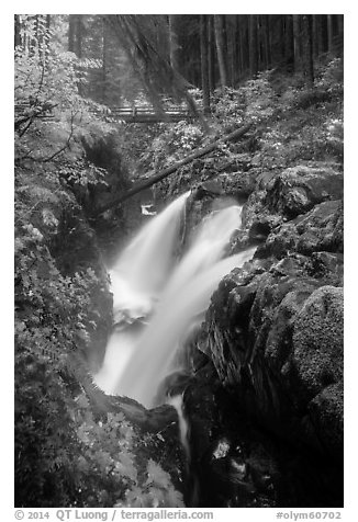Soleduc Falls and footbridge in autumn. Olympic National Park (black and white)