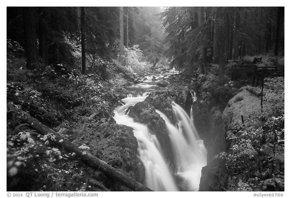 Sol Duc Falls in autumn. Olympic National Park (black and white)