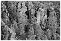 Rhyolitic rocks amongst pine trees. Pinnacles National Park ( black and white)