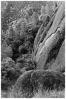Cliff and Mediterranean chaparral. Pinnacles National Park ( black and white)