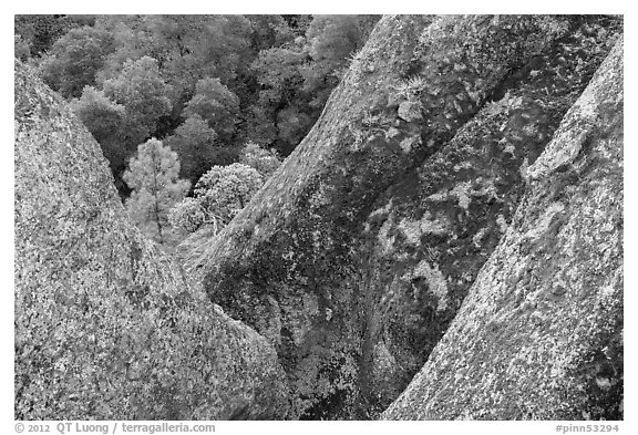 Lichen-covered volcanic rock finns. Pinnacles National Park (black and white)