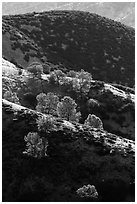 Ridges of rolling hills. Pinnacles National Park, California, USA. (black and white)